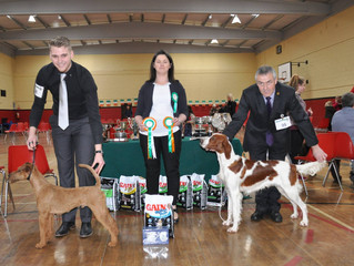 Junior Stakes Winner at Irish Native Breeds Show -Trigger (Carliams Red Alert)