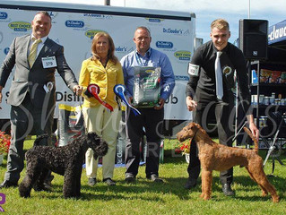 Wolfie Gets His First Group 2nd At Sligo & District All Breed Championship Show 2016.