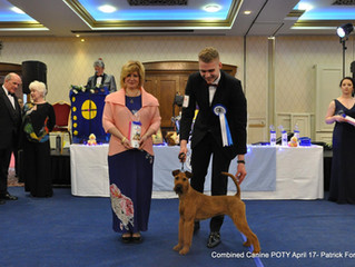 Combined Canine Pup of The Year 2017 Black Tie Event