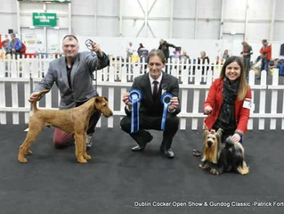 Trigger goes on a winning streak on The Final Road to Crufts 2017.