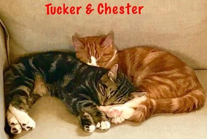 chester and tucker_edited.jpg