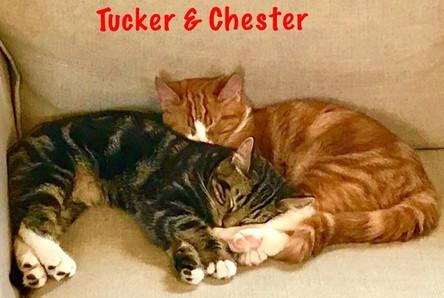 Chester & Tucker