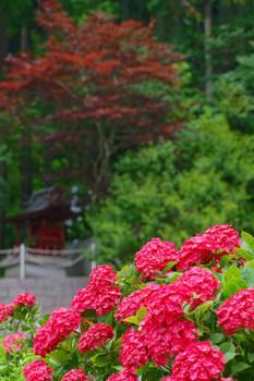 茂原 紫陽花屋敷
