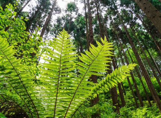 長野で森林浴