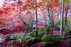 滋賀 教林坊の紅葉