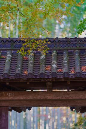 秋の地蔵院