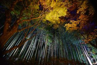 滋賀 教林坊ライトアップ