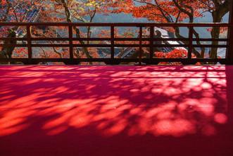 楊谷寺の影紅葉