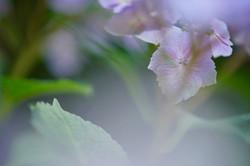 晴海トリトンスクエアの花