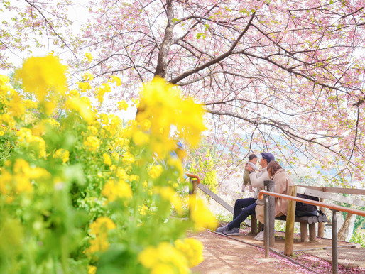 春色撮りに松田山へ💨🚗💨💨
