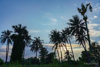 タイ コレット島の夕暮れ