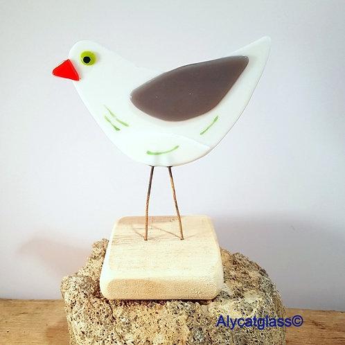 Alfie the Seagull