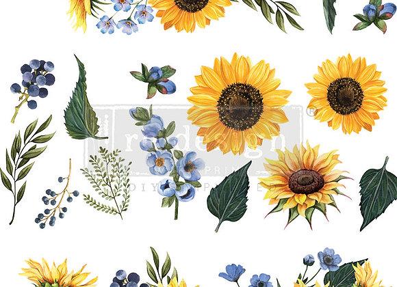 Sunflower Fields Transfer