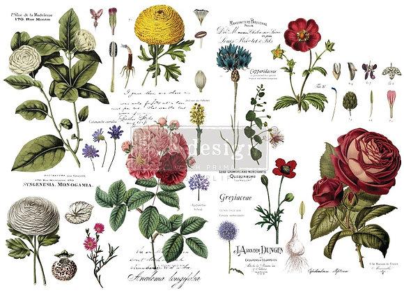 Vintage Botanical Transfer | Redesign with Prima Furniture Tr