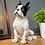 Thumbnail: French Bulldog - sitting