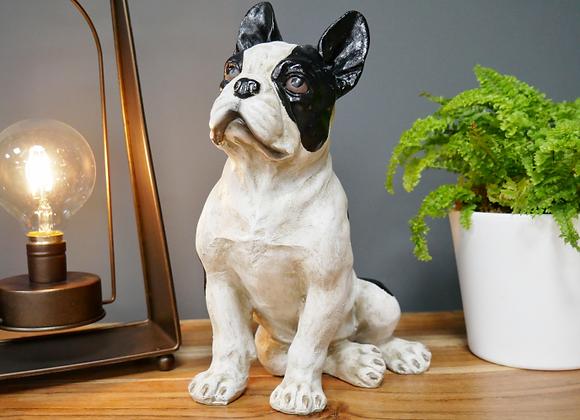 French Bulldog - sitting