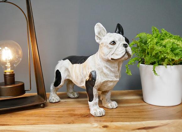French Bulldog - standing