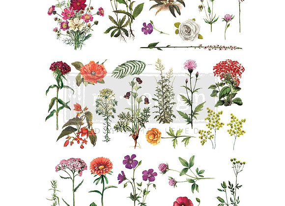 Floral Collection Transfer