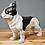 Thumbnail: French Bulldog - standing