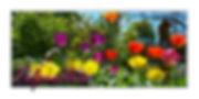 Tulpenblüte.jpg