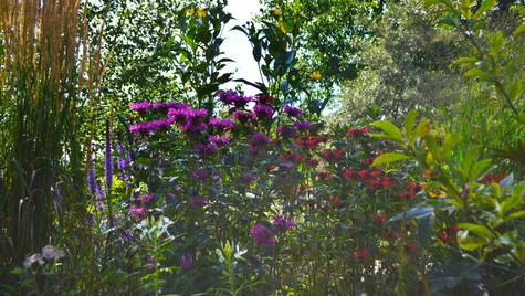 Garten 8.jpg