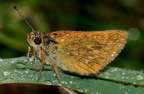 nature-wing-photography-stem-leaf-wildli