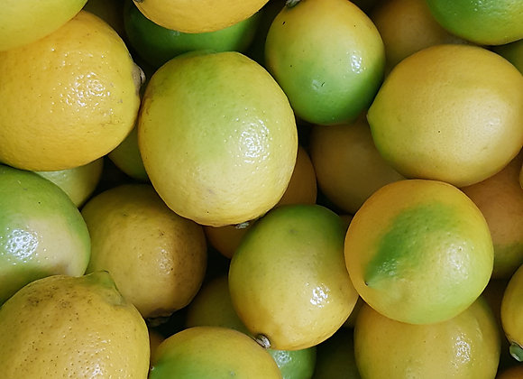 NZ Lemons, priced per each