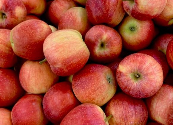 Apples, NZ Royal Gala, kg
