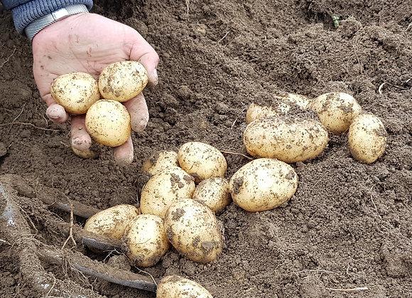 Potatoes, Organic, brushed Rocket, 5kg