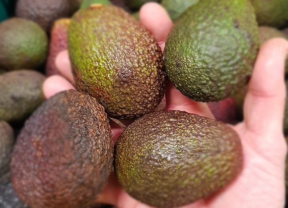 Avocado, small, each