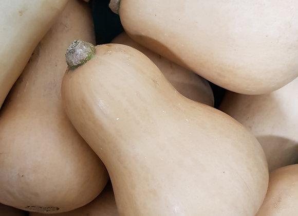 Butternut Pumpkin, priced per each