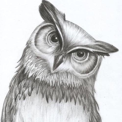 Owl Drawing Tutorial