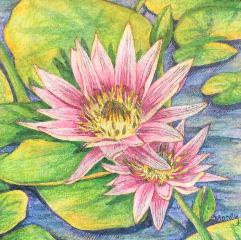 Etched Water Lily 2