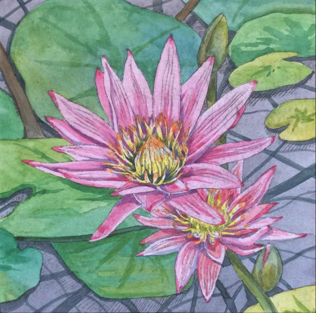 Etched Water Lily 4