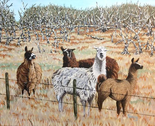 Llamas From Another Mama
