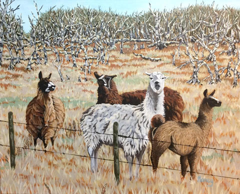 Llamas From Another Mama