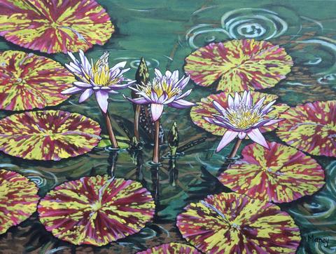 Hawaiian Waterlilies #8