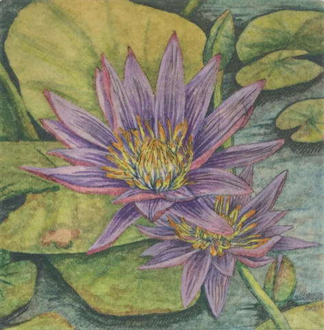 Etched Water Lily 1
