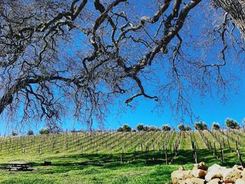 Dubost-Winery_Vineyard.jpg