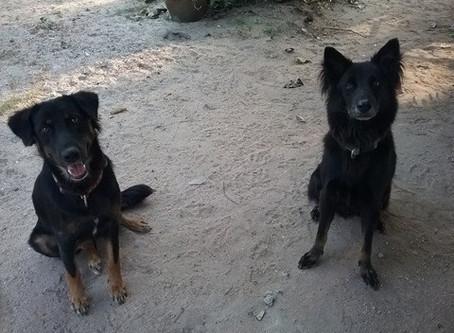 Om & Daisy
