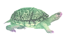 tortoise1pastel.png