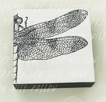 Dragonfly by Shannon Amidon