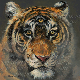 """ A Wise Tiger"" by Steven Russell Black"