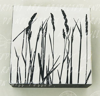 Wild Grass by Shannon Amidon