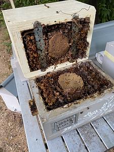 OATH Hive Split 2.jpg