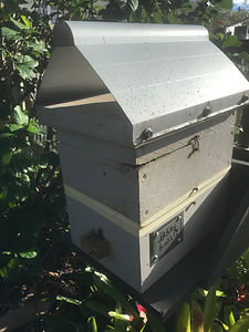 Hive In Place.jpeg