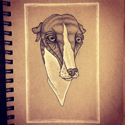 Instagram - Percy! #draw #drawing #illustration #petportrait #dog #dogs #whippet