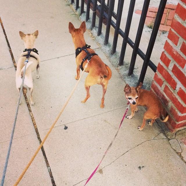 pups walk
