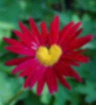 nature-heart-3.jpg
