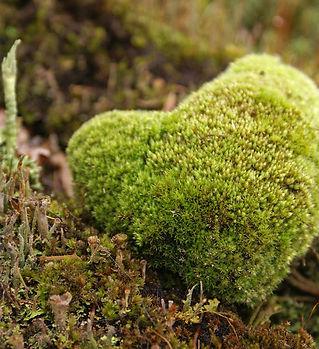 Natures-mossy-heart.jpg